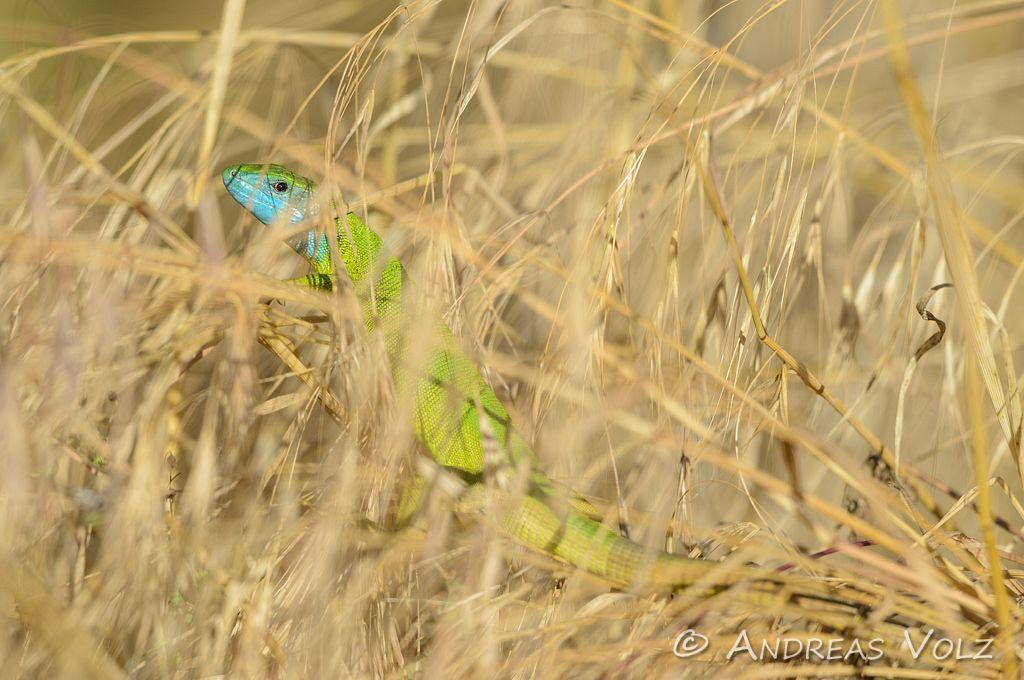 Reptilien125.jpg