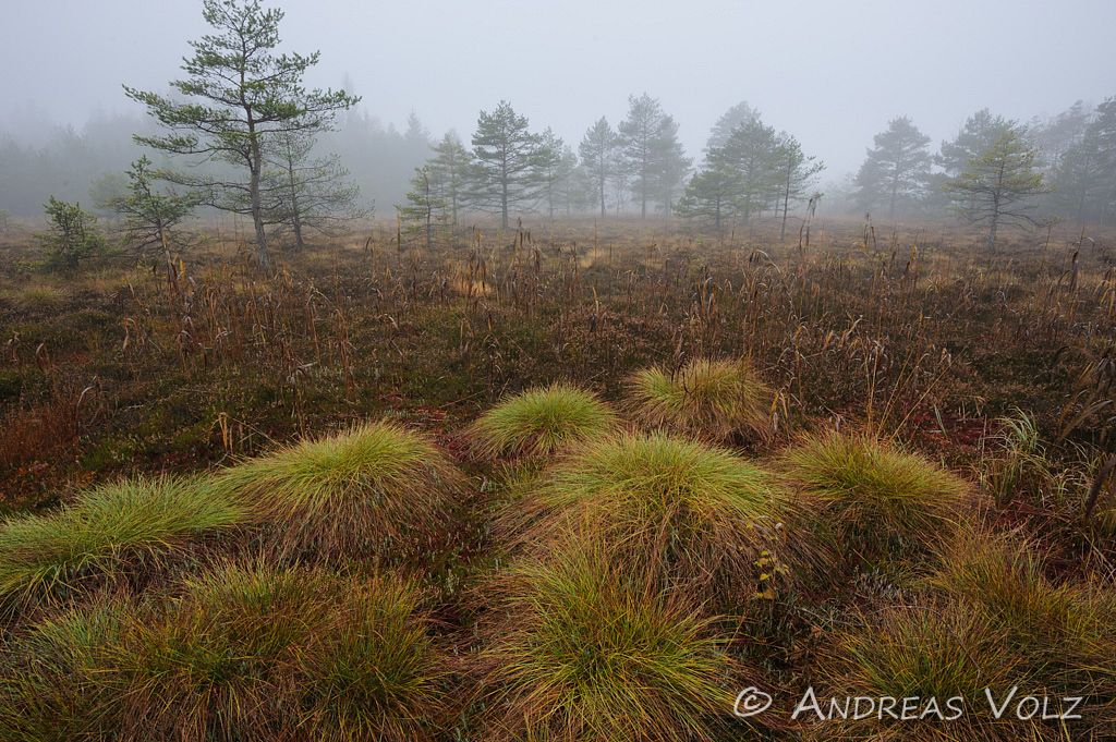 Hochmoor im Herbst