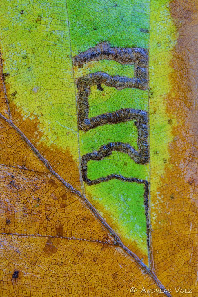 Abstrakt65.jpg