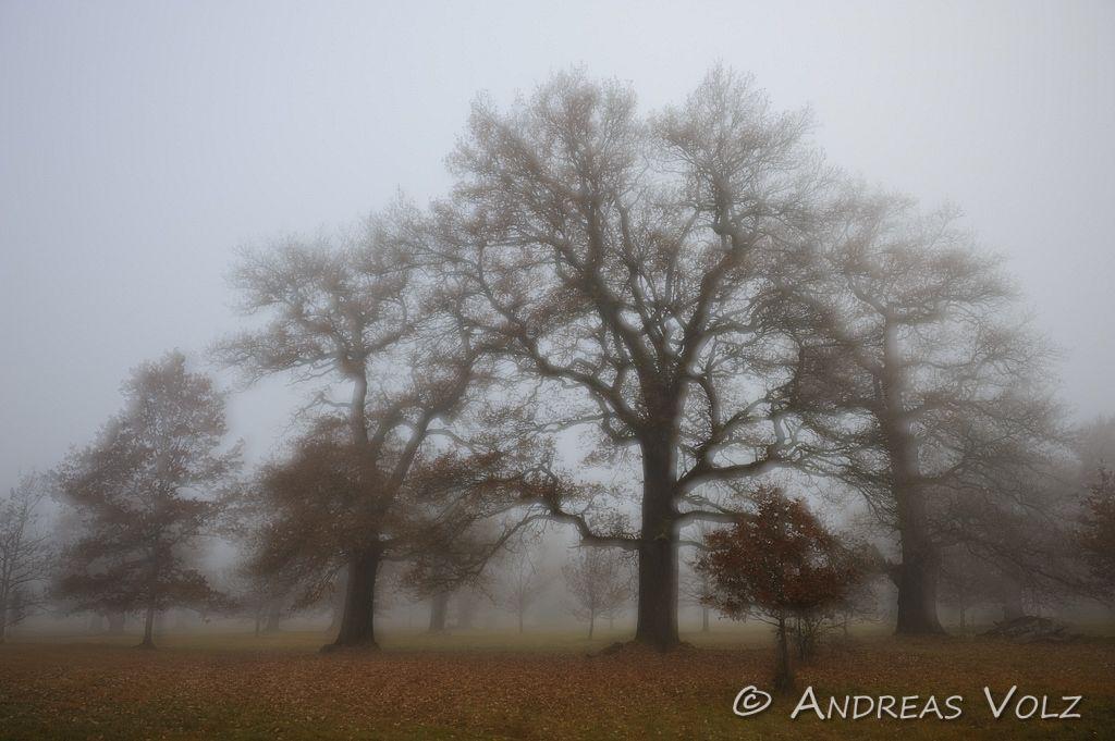 Landschaft525.jpg