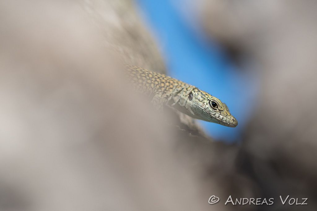 Reptilien199.jpg