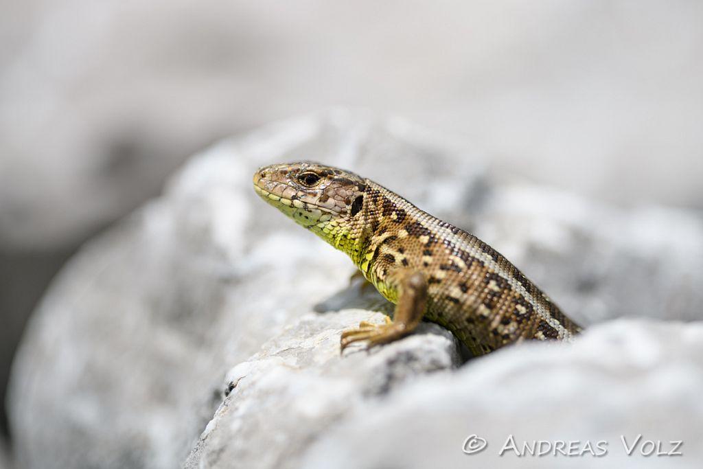 Reptilien253.jpg