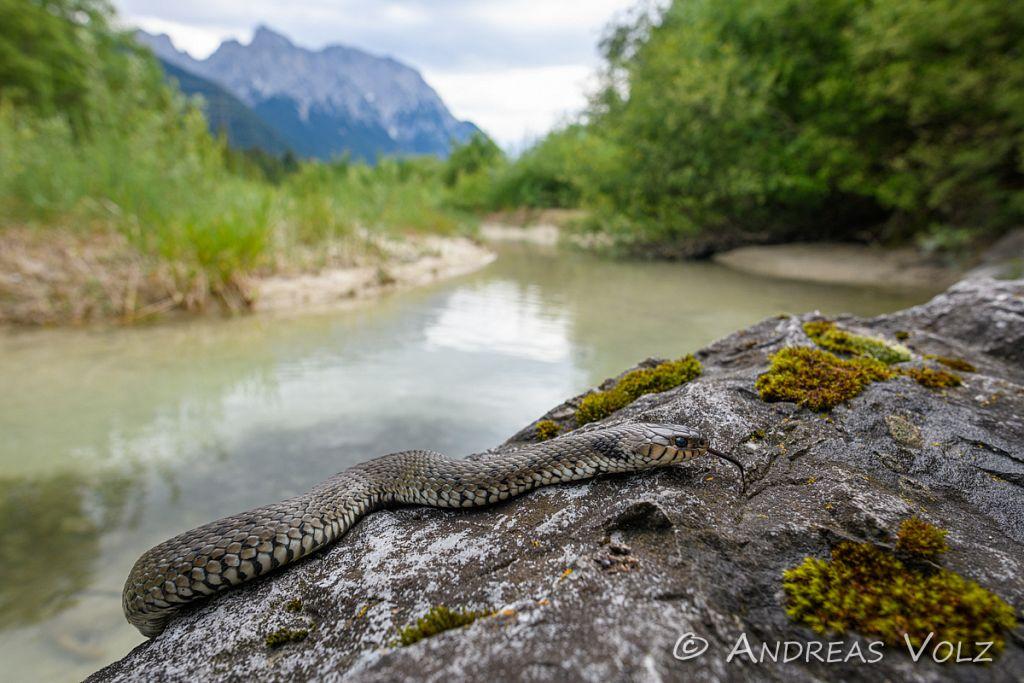 Reptilien278.jpg